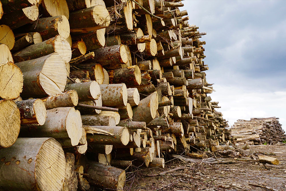 Seasoned logs in Surrey